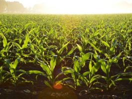 BPKP Government will give money for organic farming