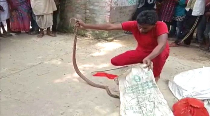 UP 41 snakes came out together in a house panic spread in the village