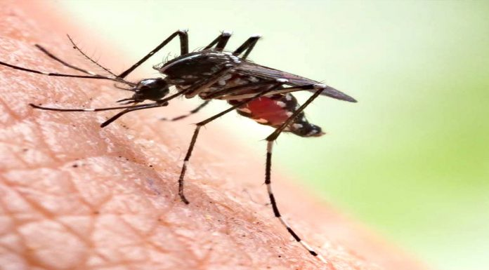 Malaria Mosquitoes will be eliminated by making female mosquitoes sterile